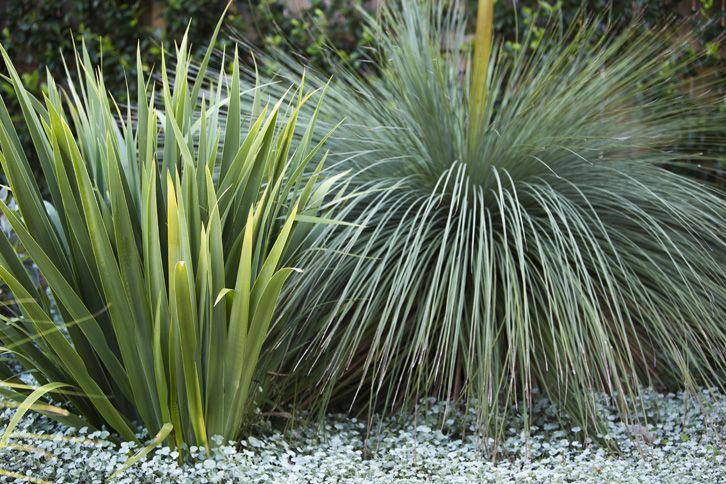 Ornamental grasses | Xeric Planting