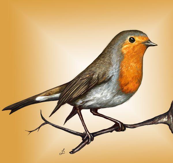 Robin bird Art Print by Laura MSS | Society6