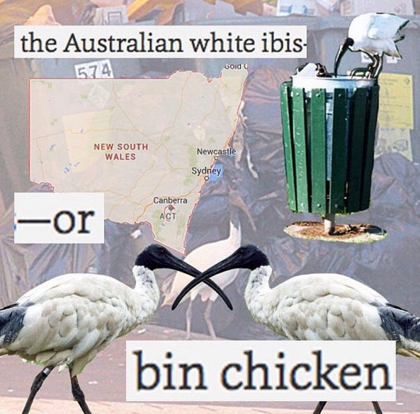 On the biggest threat to mankind: | Literally Just 31 Hilarious Memes About Life In Australia