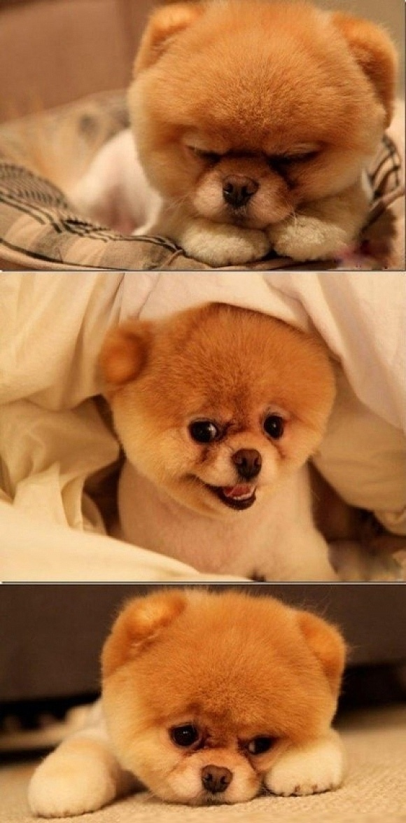 I want this puppy.