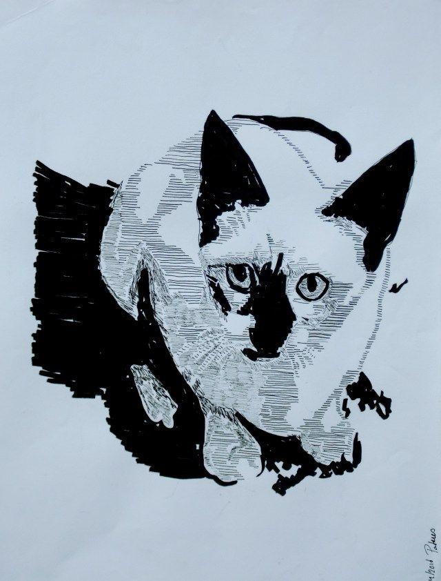 Siamkatze in Schwarz  Weiß