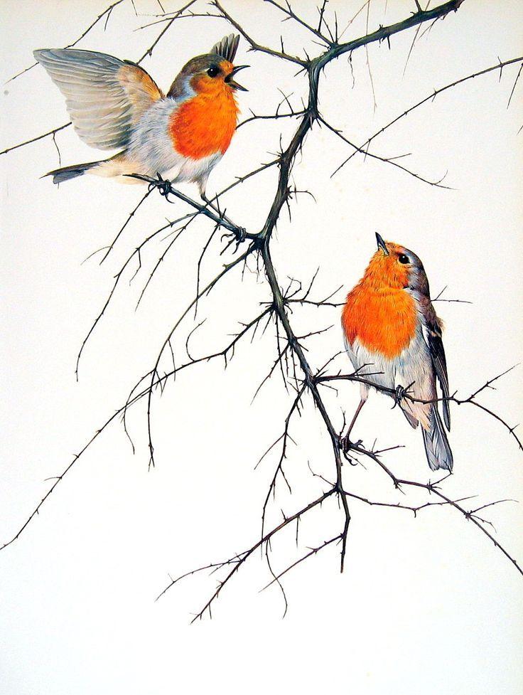 'vintage robin bird illustration' - Google Search