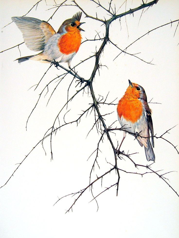 'vintage robin bird illustration' - Google Search