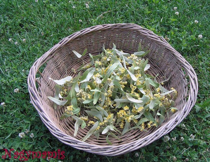 .....és ami készülhet belőle:    Hársfavirág szörp , melynek receptjét TücsökBogár  blogjában olvastam, majd készítettem el, és mondhatom i...