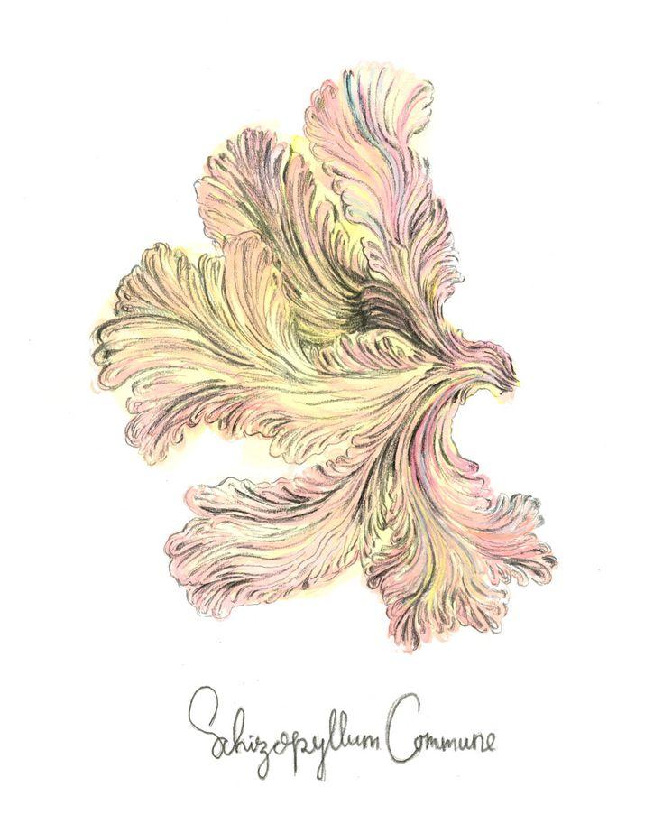 Mushroom illustration  Sylvia Stølan