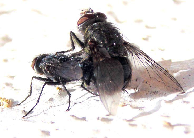 orgasmos invertebrados