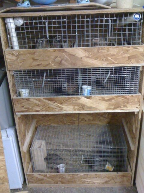 17 best images about quail pen on pinterest quails for Building a quail house