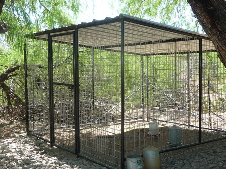 How To MAKE COCKATOO AVIARY | images of this 12 ft x large bird aviary installed for only 1 500 ...