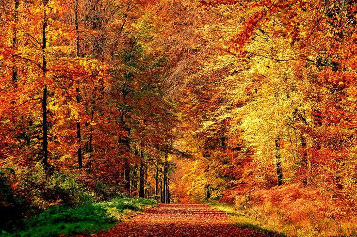 En forêt de Fontainebleau
