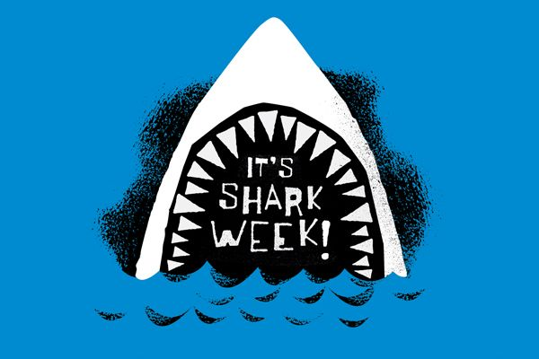 Brace yourselves - it's shark week!: Seaside Style, Favorite Things, Happy Sharks, Funny Stuff, Sharks Sharkweek, Baking Sharks, Sharkinspir Sharks, Sharks Week, Discovery Design