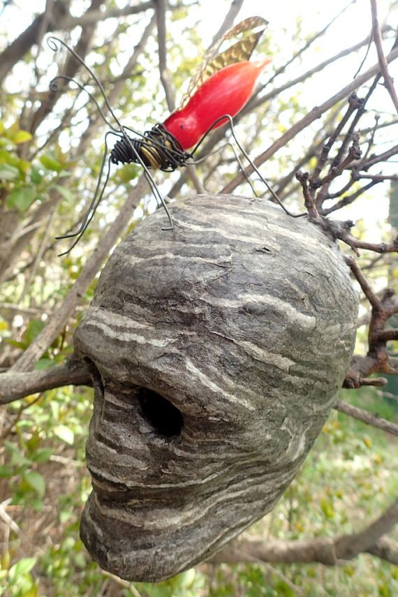 Freaky Red Wasp With Skull Hive Actual Wasp Paper