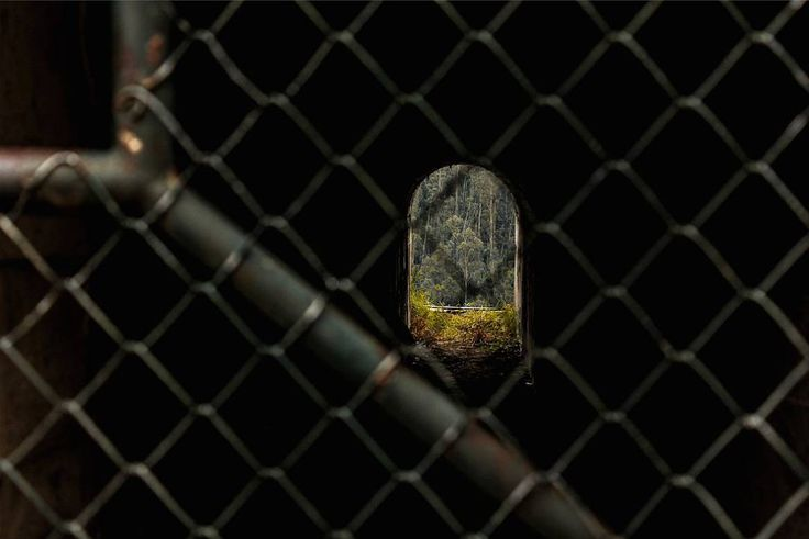 Cuando la miras y los árboles lejanos son su fortaleza #trees #nature #light #path #art #photo #wall #dark #tunnel #cage #outdoors #grid #ecuador #jail #nopeople #quito #eucalyptus #theend #darkpath #noperson #park #guapulo #parquedeguapulo #photooftheday
