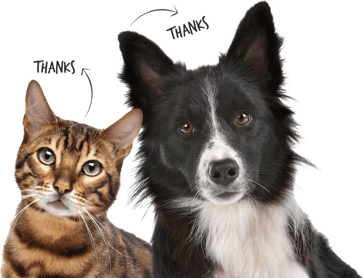 dog and cat insurance