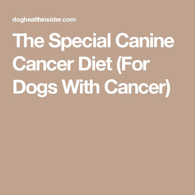 The Special Canine Cancer Diet (For Dogs With Cancer)