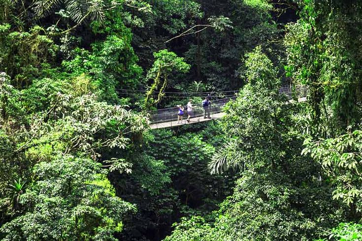 Exploring the forest canopy in #CostaRica | Alternative #winter #sun destinations you can book with #TUI | Weather2Travel.com #travel #holiday