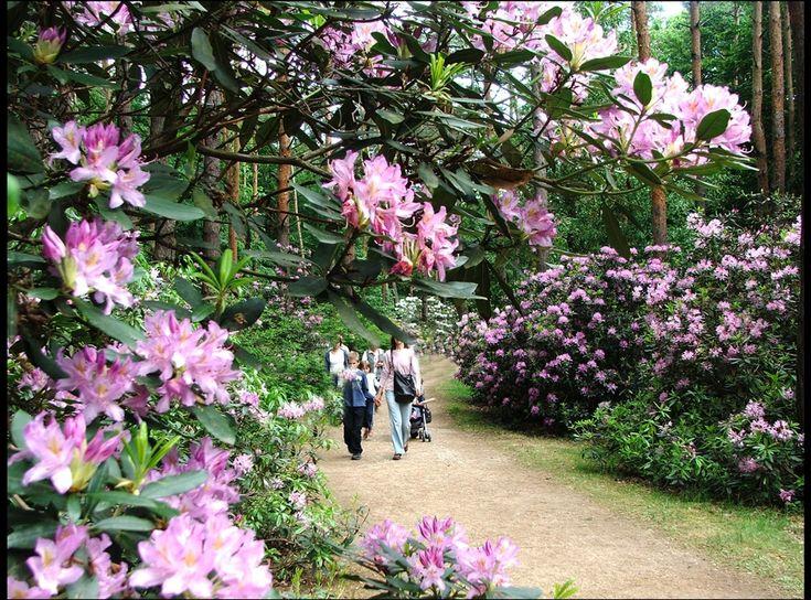 Jeli Arboretum in Hungary