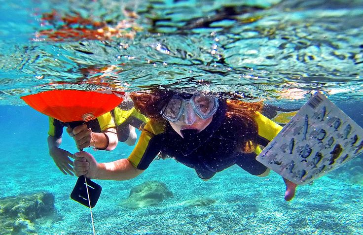 Is not only scuba diving fantastic. Snorkeling is also interesting. Especially in Skopelos island in Greece with water visibility more than 30 meters depth!