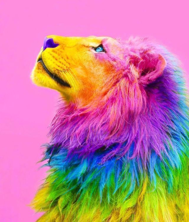 Pin By Tommy Pettersson On Colours Animals Beautiful Animal