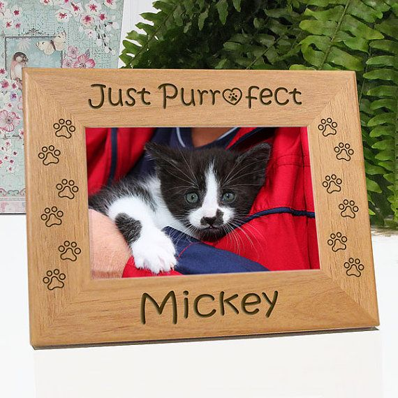 just purrfect cat picture frame
