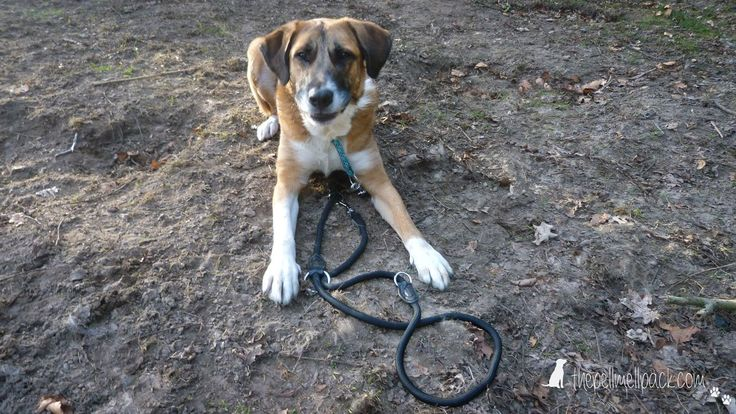 """Hundeerziehung -- Der 1. Teil unserer Reise """"In 6 Wochen zum Familienhund"""" -- Hundetraining   Hunde Erziehung   positive Verstärkung   Auslastung   thepellmellpack.de"""