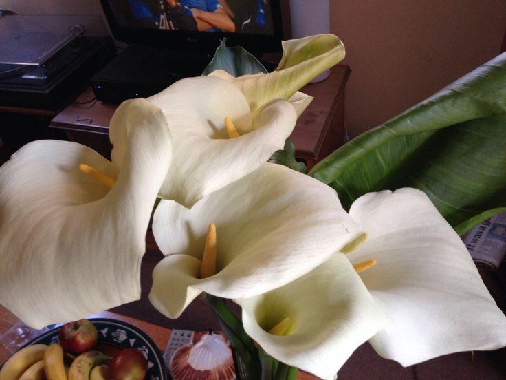 Summer lillies