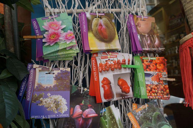 semillas florales