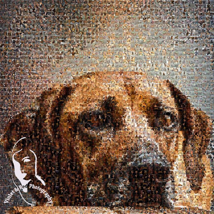 31 best Rhodesian Ridgeback Art & Gifts images on Pinterest ...