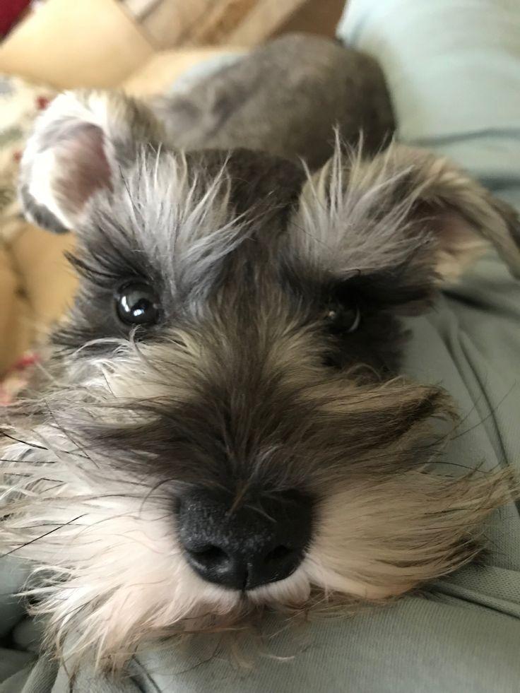 This looks so much like my dog Oscar I'm wondering if it IS Oscar