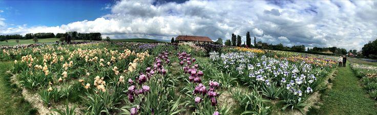 Photo panoramique de nos champs d'iris avec Portes des Iris en fond (2015)