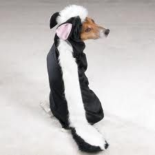 dogs in costumes - Google Search