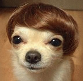 Animals in wigs: always funny to me.