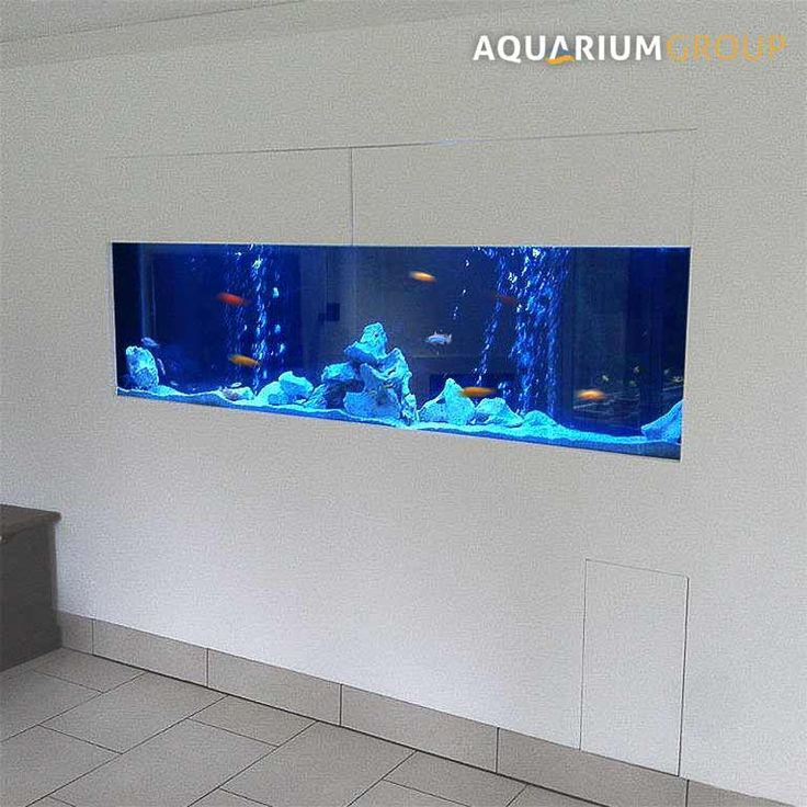 Long through wall fish tank with cichlids fish tank for Fish tank in wall