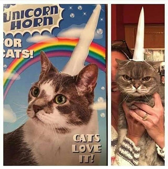 best 25 unicorn cat ideas on pinterest pusheen unicorn pusheen cat and pusheen gif. Black Bedroom Furniture Sets. Home Design Ideas
