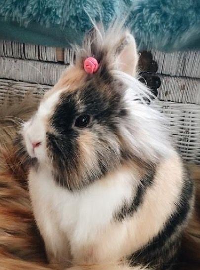 She is soooo cute, her fur looks like a bubble bee .