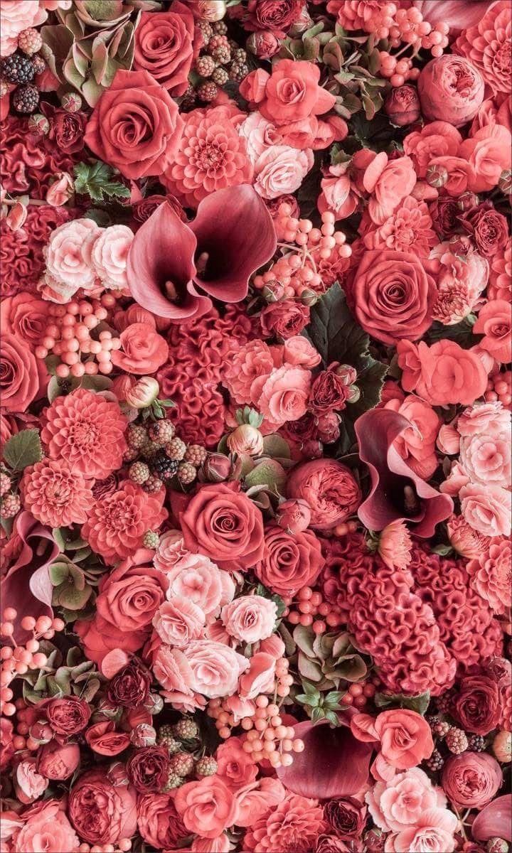 Flowerpower! #Blume #Positiv #Poster #Fotografie #Natur    – Aesthetics –