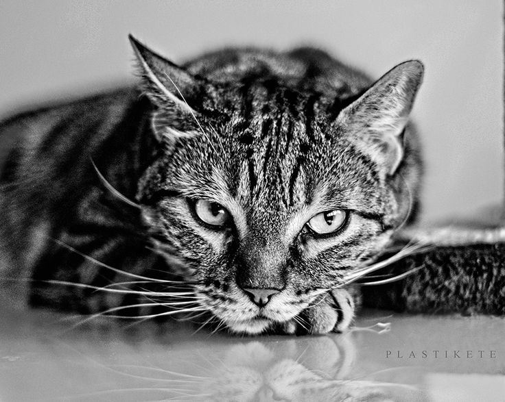 STRONGER CAT PLASTIKETE by Plastikete  on 500px