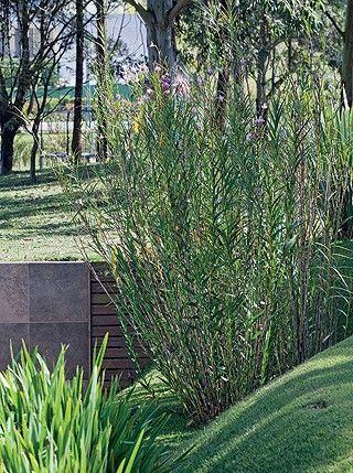 5 dicas para ter um jardim de arrasar