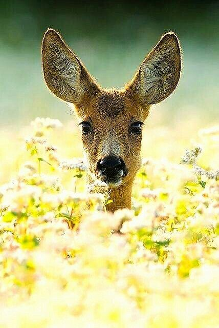 Romantiek en natuur gaan heel goed samen!