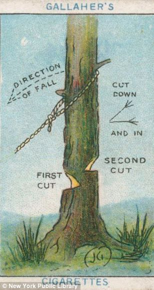 For those who need advice on chopping down trees from a cigarette card c. 1910