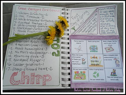 3 tips for nature journaling when you think you can't sketch #journal