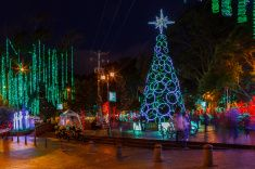Bogota, Colombia, South America - Christmas celebration lights in park stock photo
