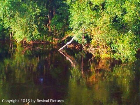 Reflective river
