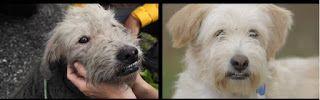 """""""O Grito do Bicho"""": Recuperação de um cão maravilhoso....."""