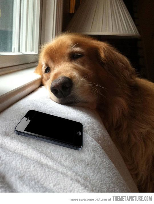 Me when waiting for a reply from my crush. but my crush is never calling...