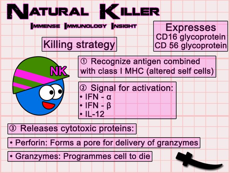 Natural killer cell Immense Immunology Insight: Get to immu-know the cells