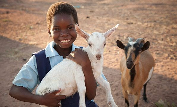 Goat: Goats help families generate an income while providing vital nutrition to growing children. This goat will help a family in Zambia thrive and help transform their entire community.
