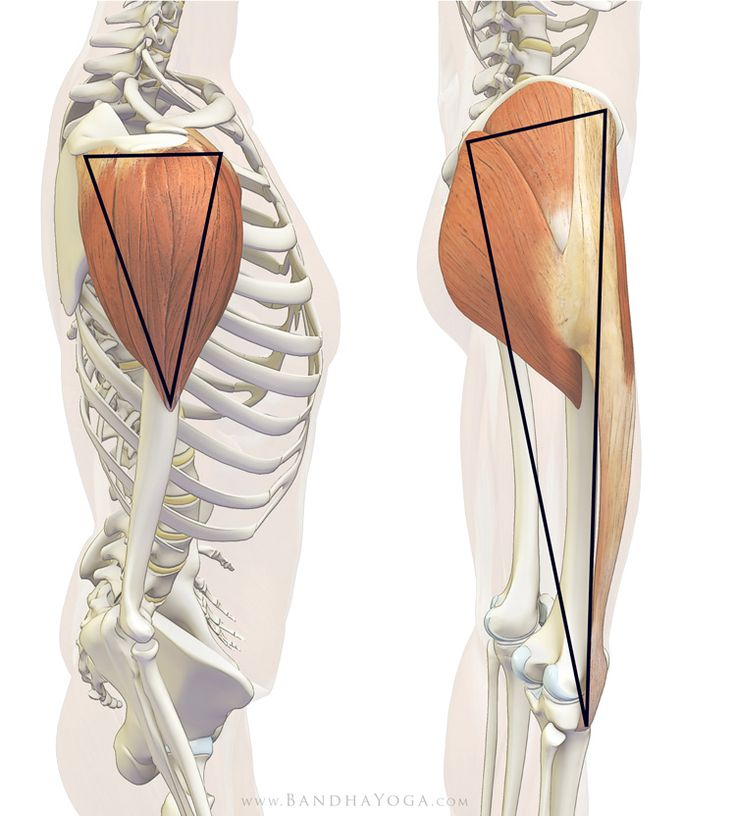 "gluteals and tensor fascia lata - ""the deltoid of the hip"""