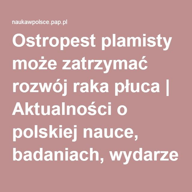 Ostropest plamisty może zatrzymać rozwój raka płuca | Aktualności o polskiej…