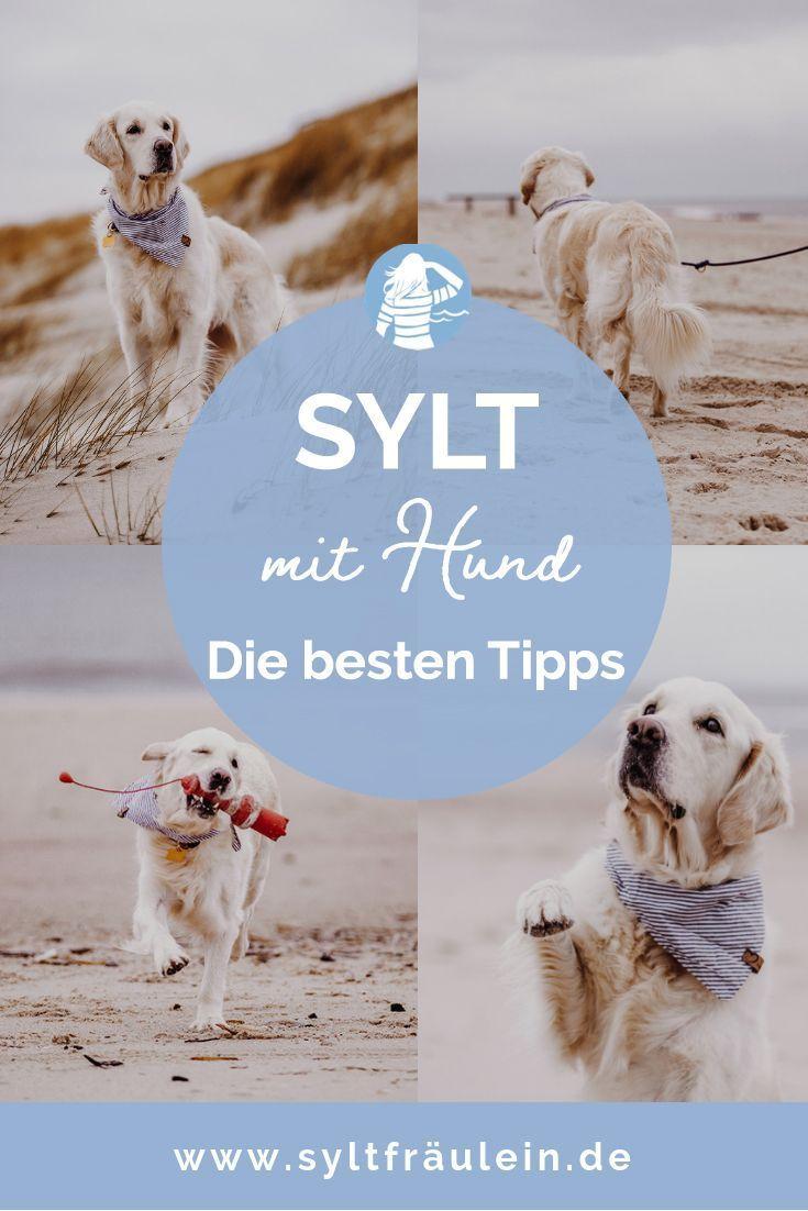 Sylt Mit Hund Die Besten Tipps Von Sylter Schnauze Sam In 2020 Sylt Mit Hund Urlaub Mit Hund Nordsee Hunde