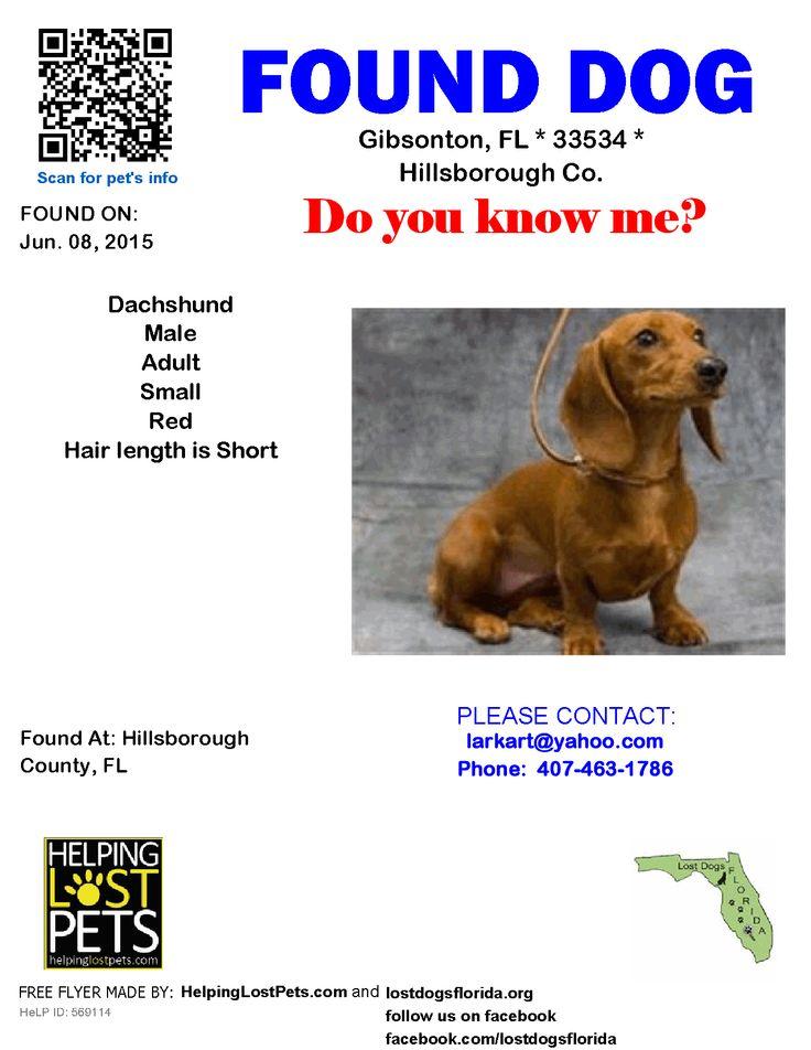 Found Dog Dachshund Gibsonton Fl United States